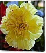 Yellow Carnation Delight Canvas Print