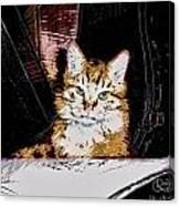 Yellow Cat Canvas Print