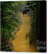 Hidden Cedar Sink Creek Canvas Print