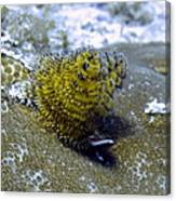 Yellow Christmas Tree Worm Canvas Print