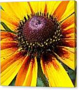 Yellow Close Up Canvas Print