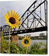 Yellow Cone Flowers And Bridge Canvas Print