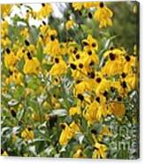 Yellow Cone Flowers Canvas Print
