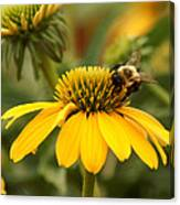 Yellow Coneflower And Bee Canvas Print