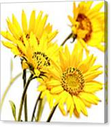 Yellow Country Wildflowers Canvas Print