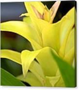 Yellow Cream Tropical Canvas Print