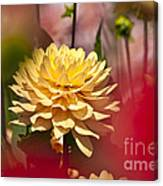 Yellow Dahlia 2 Canvas Print