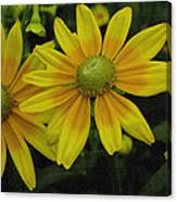 Yellow Daisies Canvas Print