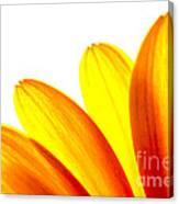Yellow Daisy Petals Macro Canvas Print