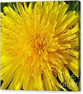 Yellow Dandelion With A Little Heart Canvas Print