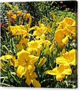 Yellow Daylilies Canvas Print