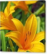 Yellow Daylily Canvas Print