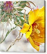 Yellow Desert Flower Canvas Print