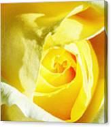 Yellow Diamond Rose Palm Springs Canvas Print