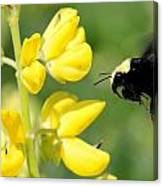 Yellow Faced Canvas Print