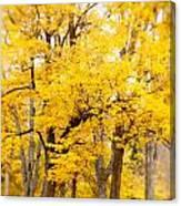 Yellow Fall Canvas Print