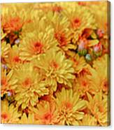 Yellow Fall Mums Canvas Print