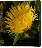 Yellow Flower 1.7103 Canvas Print