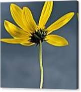 Yellow Flower Against A Stormy Sky Canvas Print