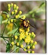 Yellow Flower Bee Canvas Print