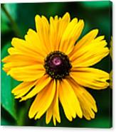 Yellow Flower - Featured 3 Canvas Print