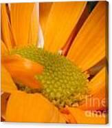 Yellow Flower II Canvas Print
