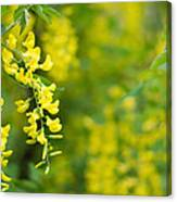 Yellow Flower In The Tree Canvas Print