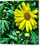 Yellow Flower Of Spring Canvas Print