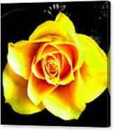 Yellow Flower On A Dark Background Canvas Print