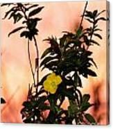 Yellow Flower Sunset Canvas Print