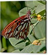 Yellow Flower With Gulf Fritillary Butterfly Canvas Print