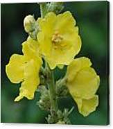 Yellow Flowers - 2 Canvas Print