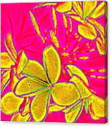 Yellow Flowers On Pink Background Canvas Print
