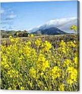 Yellow Foreground Canvas Print