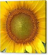 Yellow Glory #1 Canvas Print