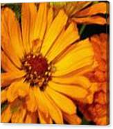 Yellow Gold Flowers Canvas Print