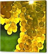 Yellow Grapes Canvas Print