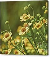 Yellow Green Canvas Print