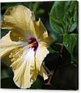 Yellow Hawaiian Hibiscus Canvas Print