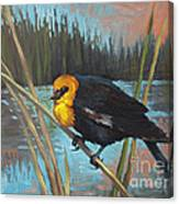 Yellow Headed Black Bird Canvas Print
