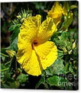 Yellow Hibiscus Hawaii State Flower Canvas Print