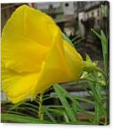 Yellow In Focus Canvas Print
