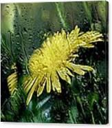 Yellow In The Rain Canvas Print