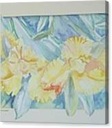 Yellow Iris' Canvas Print