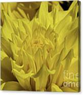 Yellow It Is Canvas Print