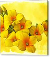 Yellow Kalanchoe - Succulent Sunshine Canvas Print