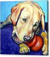 Yellow Lab With Kong Canvas Print