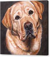 Yellow Labrador Portrait - Dark Yellow Dog Canvas Print
