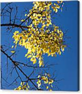 Yellow Leaves In Fall And Deep Blue Sky Canvas Print