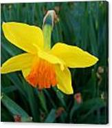 Yellow Lily Flower Canvas Print